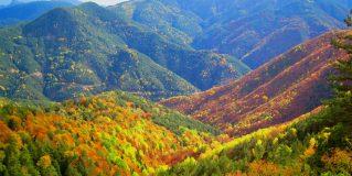 🍃 🍂 🍁 La Magia de los Colores de Otoño en nuestros bosques 🍃 🍂 🍁