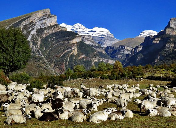 LLAMANDO A LAS PUERTAS DEL CIELO 🙌🌲 Los Valles de Vió y Fanlo