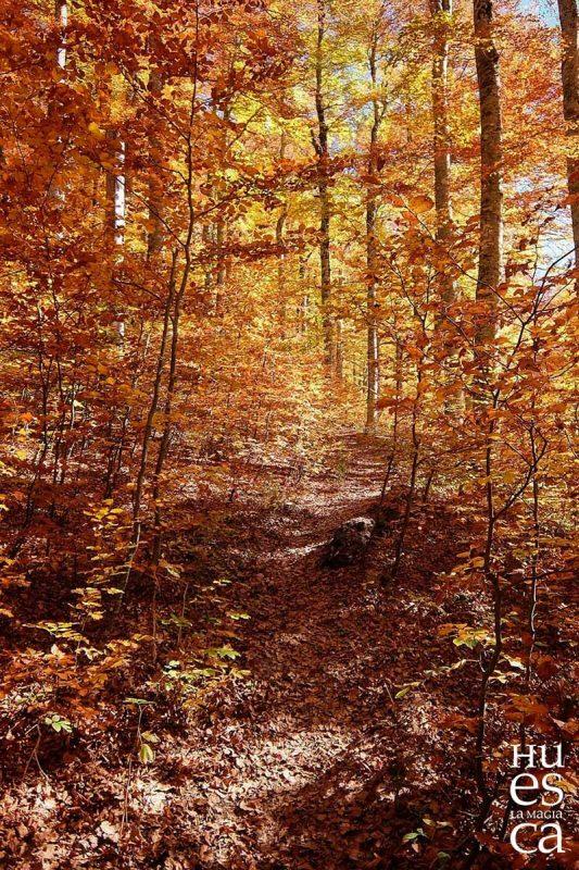 bosque-de-gamueta