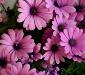 Animales flores y miradores en Huesca