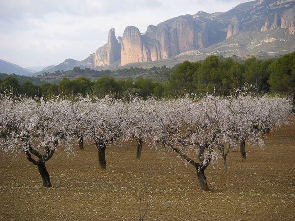 Mayos de Riglos en primavera