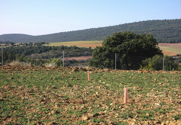 Plantación trufa en Huesca