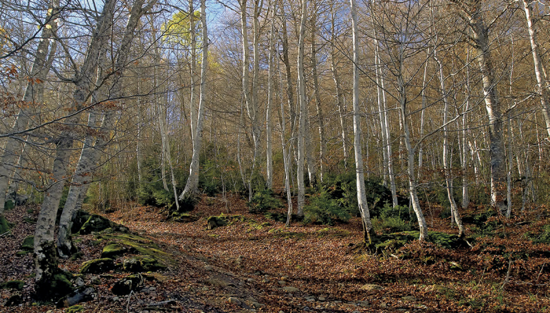 Bosque del Betato Ruta de las Brujas Huesca de http://www.lamagiadeviajar.com/pdf/MAGIA80Labrujeria.pdf