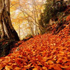 Los 10 bosques más espectaculares para descubrir este Otoño en Huesca 😍🌲🍂