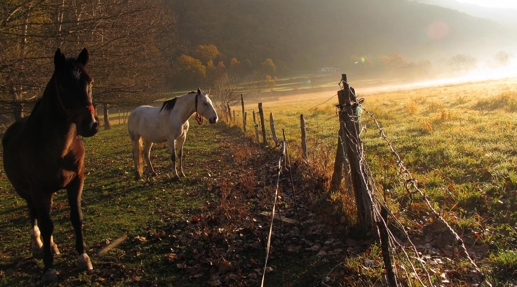 caballos-sarvise