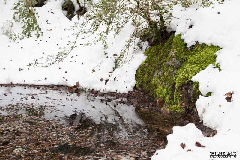 Bosque del Betato de https://www.flickr.com/photos/wilhelm-x-photography/