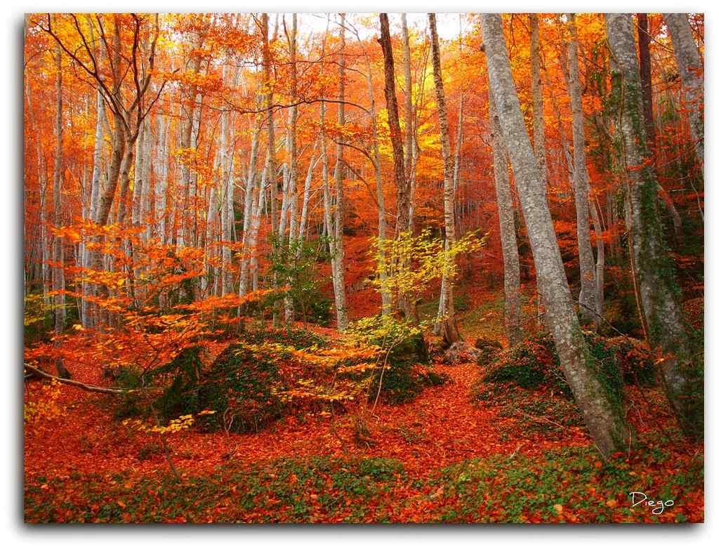 🍄🍁 Sencillísima Excursión al Bosque del Betato, uno de los bosques más espectaculares de Huesca.