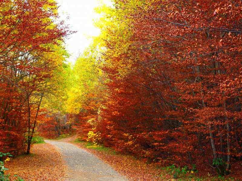 Bosque del Betato de https://www.flickr.com/photos/dirocris/