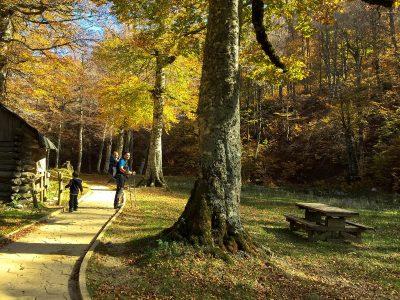 5 actividades para disfrutar del otoño con niños en Huesca 🍂 🍁 🍄