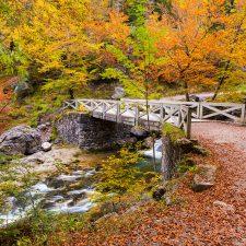 #CuadernodeViaje 🍂 🍁 Huesca, La Magia de los Bosques